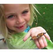 Insect-Lore-Butterfly-Garden-0-5